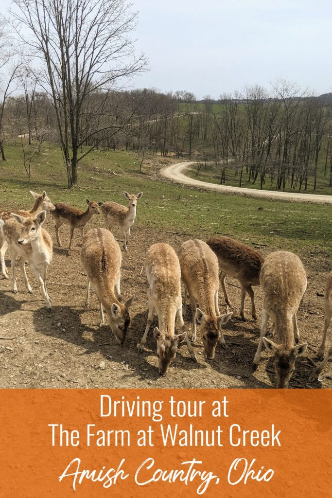 The Farm at Walnut Creek- Amish Country, Ohio - things to do in Ohio with kids- Driving tour - get close to animals