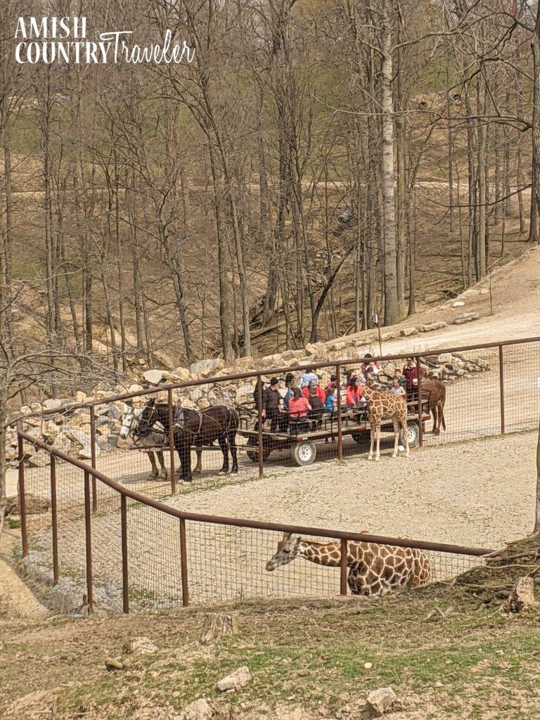 The Farm at Walnut Creek wagon tour